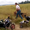 These disabled dogs playing fetch will melt your heart