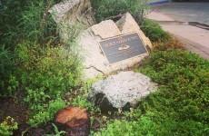 Tree honouring George Harrison killed by infestation of... beetles