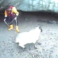Sheep rescued from rising waters is reunited with its owner