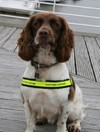 This sniffer dog found €40,000 on a man who was then arrested