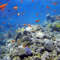 Extinction of ocean life is 'speeding up'
