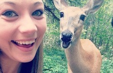 19 animals that take way better selfies than you
