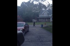 Video captures bear walking around upright like a human