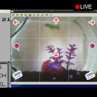 Thousands of people are watching a fish 'play' Pokémon