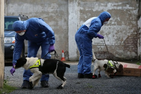 Police with victim recovery dogs in Hanover Street, Portadown.