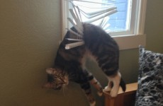 Happy World Cat Day! Look at these 14 cats who forgot how to cat
