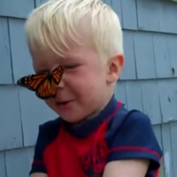 Little boy attempts to release his butterfly friend but it just can't leave