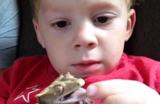 Little boy is so loyal to pet lizard that he lies for him