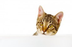 Campaign underway to have stray cats neutered