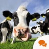Video: Would you eat meat from the offspring of clones?