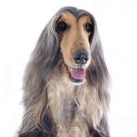 Why do we pay more VAT on hairdressing than we do on greyhounds?