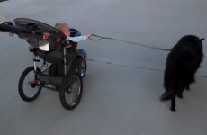 This little baby and his dog are the cutest jogging partners around