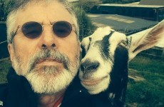 Gerry Adams took a selfie with a goat, and here's the single most devastating response