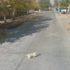 This dog may have gotten in the way of a Google Street View car...