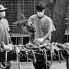 Ebola: What is it? How do people become infected?