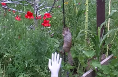 Greedy food-stealing squirrel is thwarted by pole covered in Vaseline