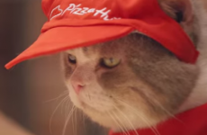 Cats have taken over a Japanese Pizza Hut