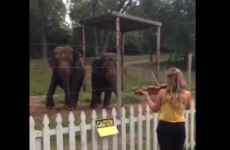 Oh just some elephants dancing to a lady playing the violin