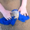 Panicked woodchuck rescued after getting stuck in its own hole