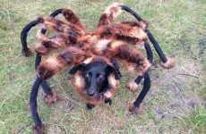 This mutant spider-dog prank is just pure evil