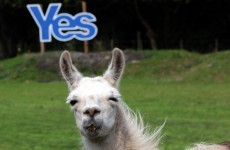 Scottish referendum on knife-edge as new poll puts 1% between Yes and No camps