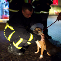 More than £1 million floods in to support dog shelter destroyed by blaze