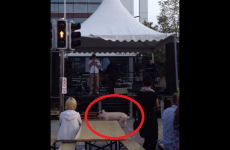 Runaway pig goes on 'rampage' at Waterford street festival
