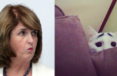 "Joan Burton reprimanded by animal rights group after ""skin a cat"" comment"