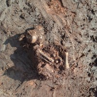 Here's the ancient bog body discovered in Co Meath