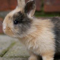 Here's how the Sign Bunny took over Twitter