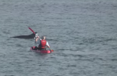 Move over Fungi! Dolphins filmed swimming off the Donegal coast