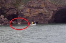 VIDEO: Stranded cow rescued from the bottom of a cliff by Waterford lifeboat