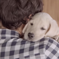 Budweiser's new anti-drink driving ad stars a puppy, and it'll break your heart