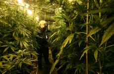"""PSNI hands out """"Scratch and Sniff"""" cards to combat cannabis cultivation"""