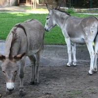 Conservatives tried to separate these donkeys because they kept having sex in public