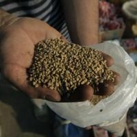 Dangerous e.coli seeds still on sale