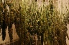 """Elaborate"" cannabis growhouse uncovered in Longford bathroom"
