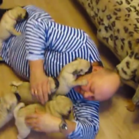 Tiny pug attack will cure you of any hint of Monday sadness