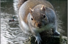 Would you eat a squirrel burger?