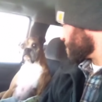 This dog is NOT in the mood for its owner's silly games