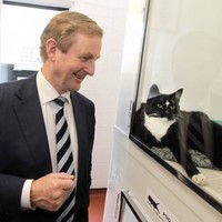 State of the Nation: Not 'Top Cat' anymore ... Enda's got company at the top of the polls