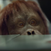 Here's why people are confused by Airtricity's new orangutan advert