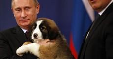 Ireland's heating bills this winter depend on what happens between Putin and Ukraine