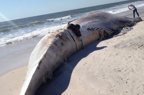 The whale washed ashore on Thursday.