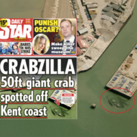 Enormous nightmare crab 'spotted' off the shore of UK seaside town