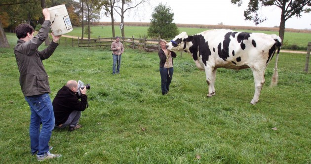 Meet Blosom, the world's tallest cow
