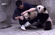 Everyone with kids will understand this man's adorable panda struggle