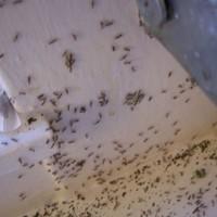 Ireland's ant population 'reaching a ten-year high'