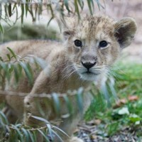 Baby boom at Dublin Zoo boosts record breaking visitor numbers