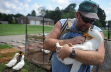 This war veteran was charged for keeping 14 ducks that helped his PTSD